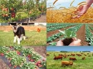 Фермерське господарство як сімейний бізнес для розведення та вирощування - поради з чого почати