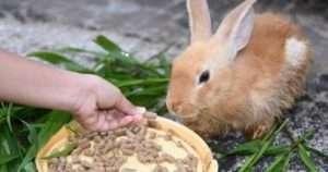 корм для кроликів своїми руками