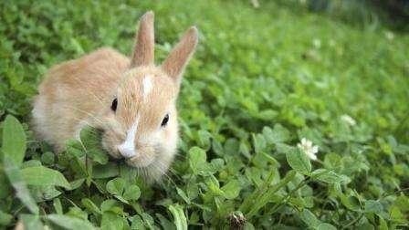 Як правильно зробити корм для кролів в домашніх умовах