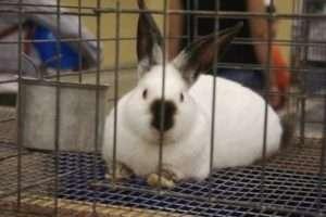 як виготовити металеві клітки для кроликів