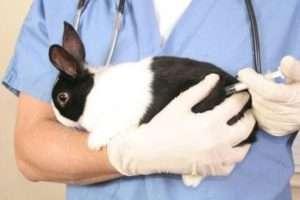 Основні принципи лікування міксоматозу у кроликів