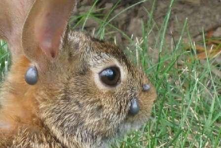 Обробка кліток для кролів. Як правильно обробляти своїми руками. Відео та фото