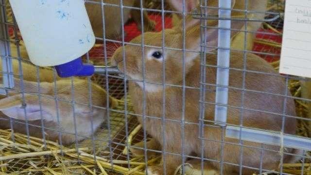 Поїлка для кролів своїми руками з пластикової пляшки - фото та відео