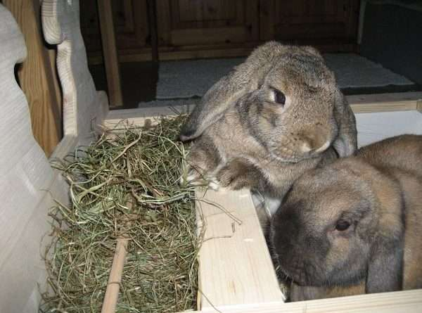 Як зробити сінник для кролів своїми руками? Фото та відео | Кролівництво