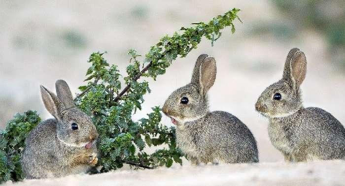 Розведення кролів взимку на вулиці. Фото та відео кролятників зимою в домашніх умовах
