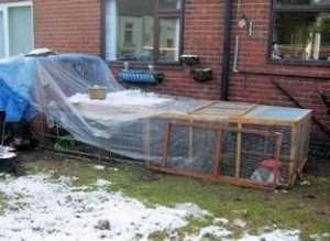Розведення кролів на вулиці взимку: цінні поради для початківців.