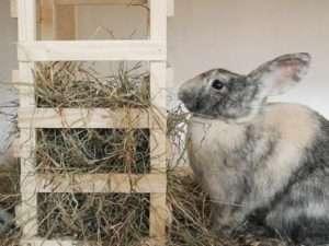 Фото та відео саморобних кормушок для кролів