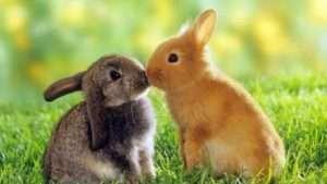 Кролівництво: Розведення кролів в домашніх умовах, клітках, вольєрах для початківців