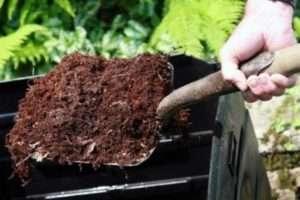 Під час цвітіння органіку для добрива картоплі краще не застосовувати