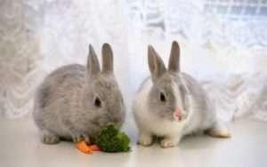 Найпоширеніші помилки при покупці клітки для декоративного кролика