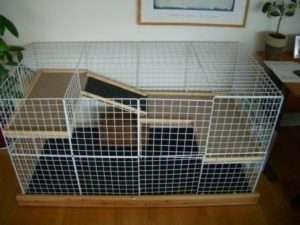Яка вартість клітки для кролика в зоомагазині