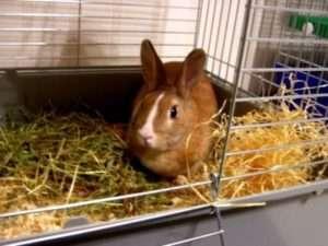 Виробники кліток для карликових порід кроликів
