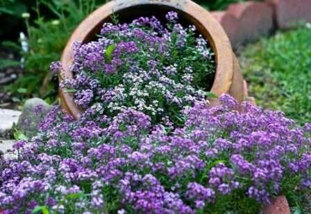 Каталог багаторічних квітів для дачі: фото з назвами та описом