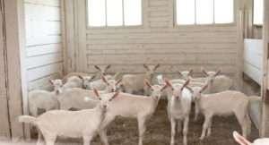 Розробляємо план організації козячої ферми