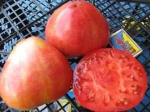 Алсу один з найвідоміших городникам сортів з невеликим зростанням і великими плодами.