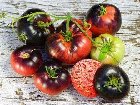 Найкращі сорти помідор на 2019 рік для України - фото, відгуки та опис врожайних сортів томатів
