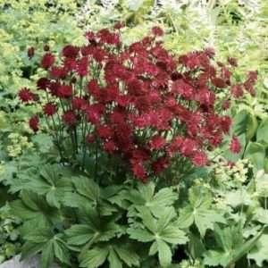 Які квіти посадити на літній клумбі, щоб вони цвіли все літо - фото