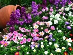 Які квіти посадити на дачі, щоб цвіли все літо - фото