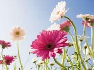 Квіти для літньої клумби - однорічні чи багаторічні?
