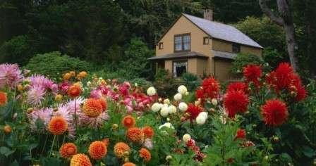 Які квіти посадити на клумбі, щоб цвіли все літо - фото багаторічних та однорічних квітів з описом