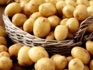Ранні сорти картоплі: фото, опис, посадка та догляд