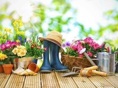 Місячний посівний календар на 2019 рік - таблиця посадки для садівника, огородника