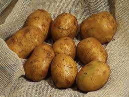 Дніпрянка - це картопля, яка була виведена в Україні
