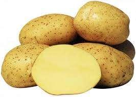 Ультраранні сорти картоплі - опис, характеристика з фото та відгуками: Як вибрати сорт ранньої картоплі