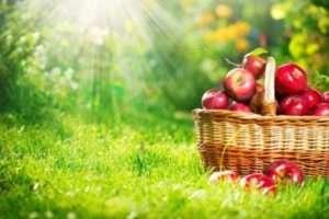 Садівництво - Як правильно висаджувати декоративні квіти та дерева і доглядати за ними