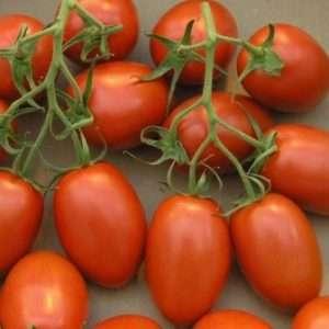 Рома - томат для консервування