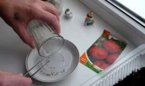 Для посадки насіння вам буде потрібно звичайний пінцет