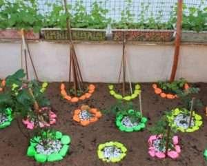 Ідеї для саду своїми руками: «Веселка» серед троянд