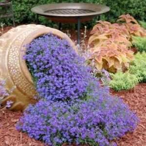 Ідеї для саду – «Чудо з горщика»
