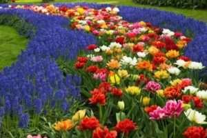 Ґрунтопокривні рослини для декору саду