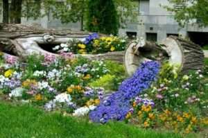 Однорічні рослини як головні матеріали ідеї для саду