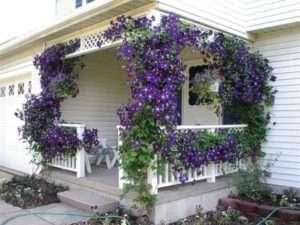 Ідеї для саду та городу своїми руками