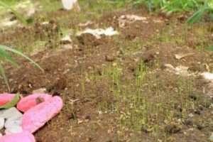 Зелена ділянка – ідеальні ідеї для саду