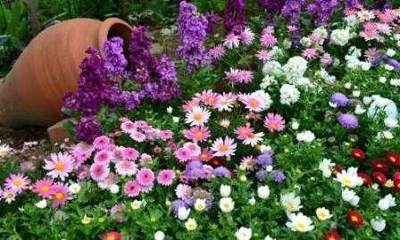 Каталог невибагливих і невеликих багаторічних квітів для саду на дачі. Опис з фото