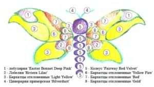 Клумба метелик