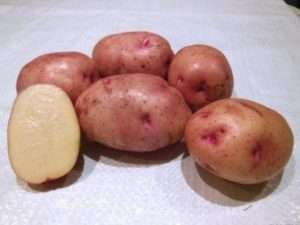 Скоростиглі сорти картоплі – обираємо найкращі