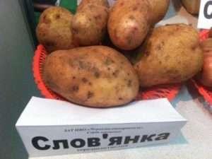 Популярність сорту картоплі, залежно від географії посадки