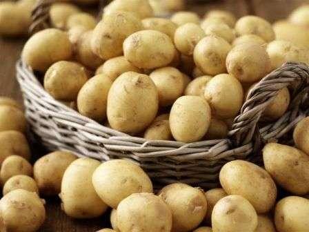 Найкращі ранні сорти картоплі для вирощування на власній ділянці