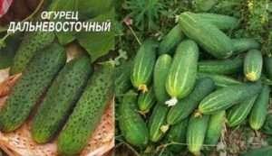 огляд 15-ти кращих сортів огірків для вирощування у відкритому грунті у 2019 році