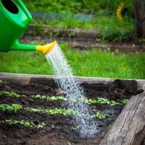Догляд за посівами редису
