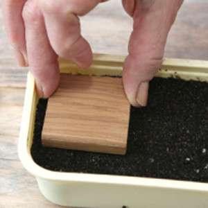 Підготуйте суміш з дернової землі, торфу, піску і перегною в пропорції 1:3:1:2 і пропарте її