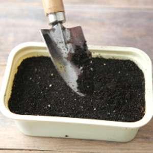 Покладіть рівномірно насіння по верхньому шарі ґрунту