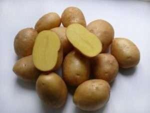 «Невський» - один з нових сортів картоплі
