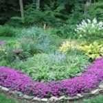 Висаджуємо низькорослі багаторічні квіти квітучі все літо самостійно на дачі