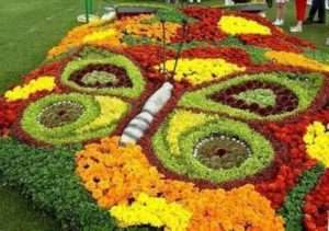 Красива клумба на дачі з однорічних квітів Головним досягненням однорічних квітів є можливість практично щороку експериментувати. Фанта