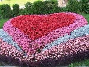 Оригінальні клумби з низькорослих багаторічних квітів